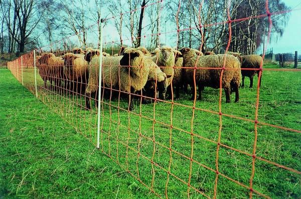 EURONETZ / Schafnetz, 90 cm hoch
