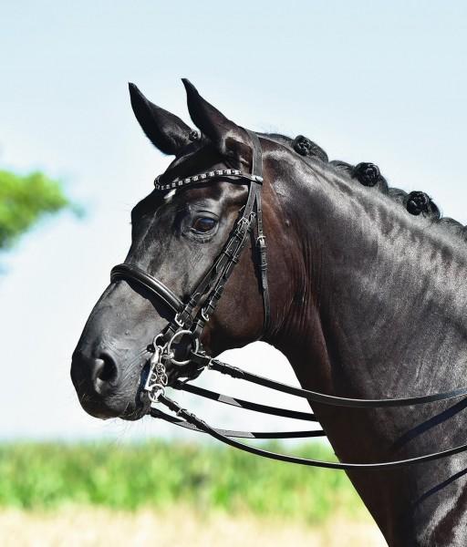 Busse KANDARENZAUM Freetime Pony